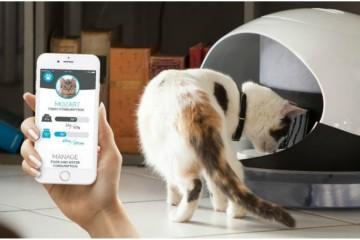 Кормлением кошек стало можно управлять со смартфона