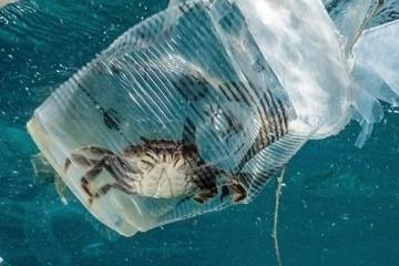 Ежегодно в мировом океане оказывается 12 млн тонн пластика