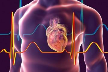 Открыты клетки, целебные для сердца после инфаркта
