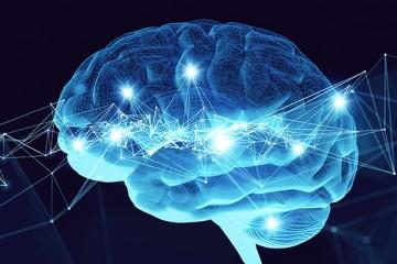 Ученые нашли, где в мозге хранятся общие знания