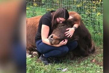 Постояльцы Лондонского отеля снимают стресс, обнимая коров