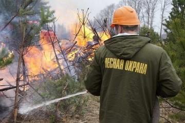 Животные бегут к людям из горящих лесов Сибири