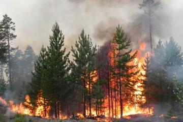 В лесах России сгорели 2,4 млрд рублей