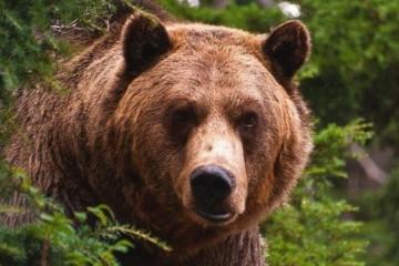Пенсионерка нашла общий язык с медведем, но потеряла дар речи