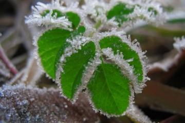 В Подмосковье пришли первые заморозки