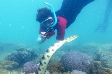 Группа бабушек засняла 249 ядовитых морских змей