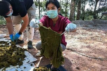 У оленя, найденного мёртвым в Таиланде, в желудке нашли 7 кг пластикового мусора