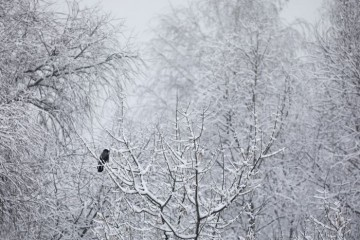 Прошлая ночь стала самой морозной для Москвы: минус 5,5