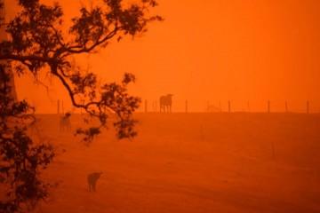 Австралийские хроники огненного апокалипсиса могут стать обычным делом