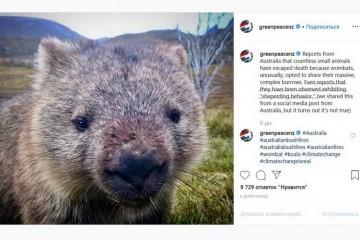 В Австралии вомбаты спасают животных от пожаров