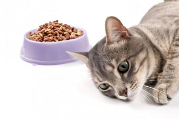 Кошки принципиально не работают за еду